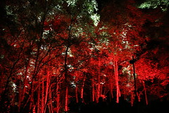 2018 - 4.10.18 Enchanted Forest (158) (marie137) Tags: forest lights trees show marie137 bright colourful pitlochry treeman attraction visit entertainment music outdoors sculptures wicker food drink family people water animation