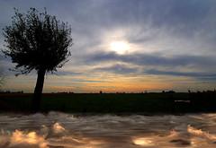 Water is the driving force of all nature. Leonardo da Vinci (genevieve van doren) Tags: landscape paysage sunset coucherdesoleil tree arbre water eau