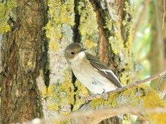 Little bird in the trees of the river bank (cami.carvalho) Tags: bird passarinho natureza nature