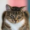 Javacats14Oct2018296.jpg
