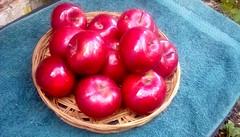 McIntosh apples! (Maenette1) Tags: mcintosh apples red pies menominee uppermichigan flicker365 allthingsmichigan absolutemichigan projectmichigan