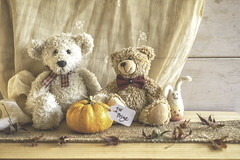 16/31: And the winner is... (judi may) Tags: october2018amonthin31pictures happyteddybeartuesday pumpkin munchkin autumn october teddybear teddies thing autumnleaves leaves lace stilllife tabletopphotography canon5d 50mm