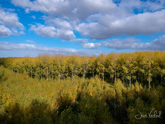 forest (Jaco Verheul) Tags: sky forest wood bos cloud clouds landscape drone dji spark tree trees jaco verheul