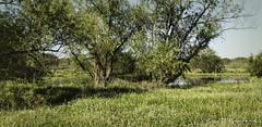 _MG_6985 (Scott Sanford Photography) Tags: 6d canon ef2470f28l eos landscape naturalbeauty naturallight nature outdoor sunlight texas topazlabs wetlands