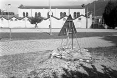 La fine di un ippocastano (sirio174 (anche su Lomography)) Tags: ippocastano rosa ippocastanorosa abbattuto morto dead como italia italy albero tree zorki1 ilfordfp4