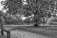 Tranquility!😊 (LeanneHall3 :-)) Tags: blackandwhite mono tranquillity bench lake trees treetrunk branches leaves conkers autumn eastpark hull kingstonuponhull landscape canon 1300d groupenuagesetciel