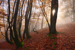 Light my fire (Hector Prada) Tags: autumn otoño forest bosque light luz mist bruma fog niebla sun sol tree árbol leaves hojas nature naturaleza woods magic dreamy paísvasco basquecountry explore1