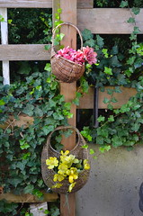 Baskets (Neal D) Tags: bc gibsons flowers flower basket baskets ivy stairwell