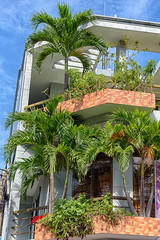 Palms on the balkony (NguyenMarcus) Tags: vungtau bàrịa–vũngtàu vietnam vn worldtrekker aasia