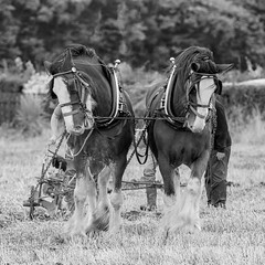 Vintage ploughing match (jac.photography49) Tags: autumn blackwhite exposure field grass images ireland horses 5dmkiii magilligan northernireland plough fullframe view vintage