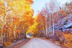 follow me (Maureen Bond) Tags: ca highsierra highelevation aspens path road hike ride followme trees rocks firstsnow light fall autumn