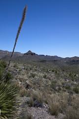 2015 - Texas (Mark Bayes Photography) Tags: bigbendnationalpark texas usa unitedstates chihuahuandesert brewstercounty nationalparkservice americannationalpark westtexas borderingmexico park buttress
