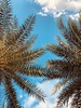 Lazy Sunday (TnyMont77) Tags: peaceful peace warm hd backround wallpaper chill resting central orlando 2018 sky clouds leaves hammock sundays sunday lazy summer fall blue palmtrees palm trees tree florida