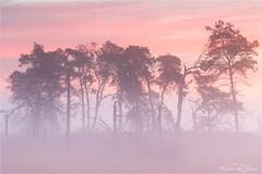 Kalmthoutse Heide! (karindebruin) Tags: annemarie belgie jos kalmthoutseheide kleuren zonsopkomst bomen fog heather heide mist sunrise trees pink clouds wolken roze