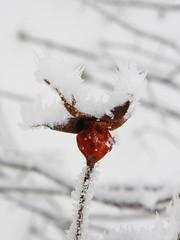 07509680 (aniaerm) Tags: snow ice frost