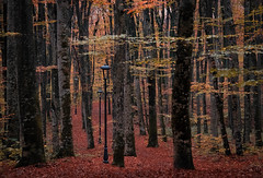 Through the forest (V Photography and Art) Tags: woods trees autumn leaves path lanterns colour fujixt2 croatia mukinje streetlamps forest