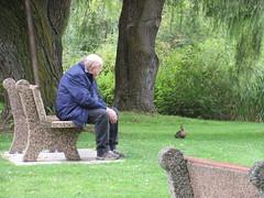 Keeping company (jamica1) Tags: mcguire lake park salmon arm bc british columbia canada duck mallard man elderly bench