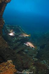 IMG_1456 (davide.clementelli) Tags: diving dive dives padi immersione immersioni ampportofino portofino liguria friends amici underwater underwaterlife sottacqua