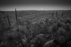 seen on a recent trip to the moon... (liam.jon_d) Tags: xanthorrhoeaquadrangulata mono arty australia australian bw billdoyle blackandwhite devil devilsnose devilsnosetrail evening formation fullmoon fullmoonrise glowing grasstree hike hiking kangarootail landscape monochrome moon moonrise orb para parawirra parawirraconservationpark parawirrarecreationpark park pickmeset reserve river rock rocky sa southaustralia southaustralian southpara southparariver track trail vale valley walk walking xanthorrhoea yacca yacka yakka mzuiko 12100mm pro f4 f40 mzuiko12100mmf40pro mzuiko12100mmf4pro stabilised superstabilised olympus oly crepuscular