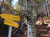 (the life of Burge) Tags: woods sticks hiking mountain slovenia