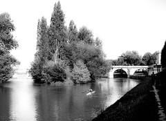 Rameur (Philippe78955) Tags: blackwhite france iledefrance yvelinesiledefrance daylight day holidays river water sky skylight city cityscape poissy fr