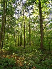 Unterholz (The-Beauty-Of-Nature) Tags: autumn fall herbst cozy mine october nature photography original light licht sunny sonnig forest woods wald trees bäume kühkopf naturalresort