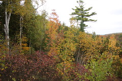IMG_6328 (sjj62) Tags: fishcreekwi doorcountywi fall autumn woods doorcounty fishcreek 40d
