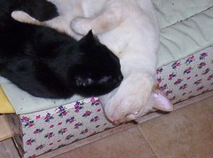NUS-BETTY IN LOVE... (LOISA FE) Tags: familia family love amor hermanos brothers blanco negro white black home casa hogar pet
