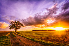 A Deeper Yearning (iratebadger) Tags: nikon nikonphotography d7100 nikond7100 nature tree tamron tamron1024mm england eastridings evening shadows sunset sun skyscape landscape field farmland clouds colours countryside rural outside orange blue yellow green grass iratebadger