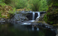 (PCL Photo) Tags: waterfall creek oregon pacificnorthwest water trees forest siuslawnationalforest oregoncoast florence swirl movement centralcoastrange