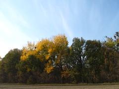 Autumn. October 20, 2018 Ukraine. (ALEKSANDR RYBAK) Tags: осень сезон погода природа ландшафт пейзаж деревья листва небо облака autumn season weather nature landscape trees foliage sky clouds