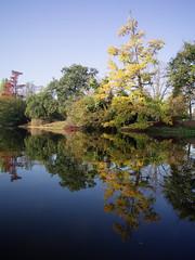1361 (amansjeanphilippe) Tags: carlzeiss rollei sinar hy6 distagont450 fle amansjeanphilippe landescape paysage reflet autumn automne paris boisdeboulogne