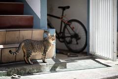 猫 (fumi*23) Tags: ilce7rm3 sony street sel85f18 85mm katze gato neko cat chat a7r3 animal alley emount ねこ 猫 ソニー