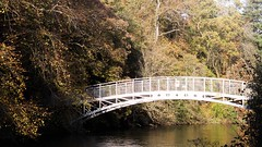 Autumn Walkway (callumggibson) Tags: nature tree bridgemanmadestructure river forest water outdoors autumn parkmanmadespace landscape scenics lake leaf greencolor woodland pond plant nopeople beautyinnature woodmaterial