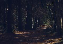 Trees (joshdgeorge7) Tags: autumn october trees path walking pentax ks2 cornwall coastal coast beach britain