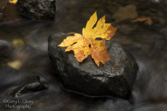 Leaf in the Stream (Gary L. Quay) Tags: autumn starvationcreekfalls columbiagorge oregon columbiarivergorge starvationcreek waterfall pacificnorthwest leaf stream creek nikon garyquay