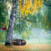 Tire swing hangs from a tree with autumn fog in the background