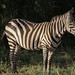 Safari Flickr (187 of 266)