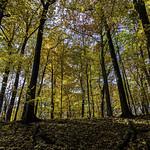Beneath the Golden Maples thumbnail