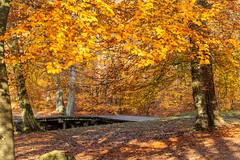 6M7A4244 (hallbæck) Tags: autumn fall efterår skov forest bro bridge fantasiøen fantasyisland præstevang hillerød hilleroed denmark autumno otoño autono