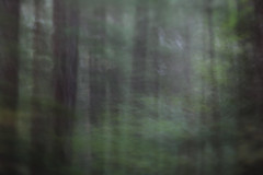 River Bridge (Tony Pulokas) Tags: rogueriver forest oldgrowth oregon autumn fall sunset night twilight tree douglasfir maple vinemaple blur motionblur intentionalcameramovement camerashake