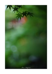 2018/9/2 - 4/15 photo by shin ikegami. - SONY ILCE‑7M2 / Lomography New Jupiter 3+ 1.5/50 L39/M (shin ikegami) Tags: silhouette シルエット 紅葉 sky 空 井の頭公園 吉祥寺 summer 夏 sony ilce7m2 sonyilce7m2 a7ii 50mm lomography lomoartlens newjupiter3 tokyo sonycamera photo photographer 単焦点 iso800 ndfilter light shadow 自然 nature 玉ボケ bokeh depthoffield naturephotography art photography japan earth asia