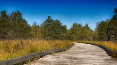 Presque sauvage ! (Fred&rique) Tags: lumixfz1000 photoshop raw hdr doubs tourbières paysage nature végétation chemin bois automne