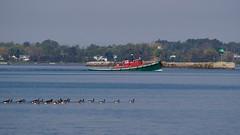 G Tug Headed Home (flannrail) Tags: tug tugboat washington ship boat lakeerie buffalo newyork