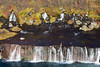 Hraunfossar (helgibjarna) Tags: borgarfjörður helgibjarnason hraunfossar hvítá hvítárbrú ylfakristínbjarnadóttir barnabörnin brýr börn fjölskyldan haust haustlitir leikir ár íshokkí íþróttir