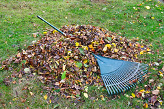 (285/365) Friday October 12th (philk_56) Tags: garden grass fallen leaves rake