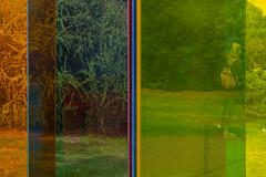 Through No. 814 (2) (pni) Tags: through reflection grass plant glass color colour sculpture art friezesculpture2018 regentspark uk18 london uk england unitedkingdom pekkanikrus skrubu pni