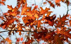 Autumn 2018 in south London | Crystal Palace-13 (Paul Dykes) Tags: london england unitedkingdom gb uk crystalpalace autumn fall autumncolours fallcolors