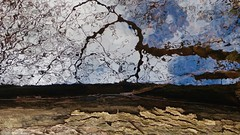 invitation to the blues .... (Edinburgh Nette ...) Tags: river treetrunk bark reflections shadows abstracts water light flipped