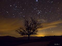 Lluvia de estrellas. (Lourdes Olmos. lolmost) Tags: noche niebla árbol estrellas lourdesolmos altopalancia
